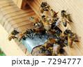 西洋蜜蜂 養蜂 ミツバチの写真 7294777