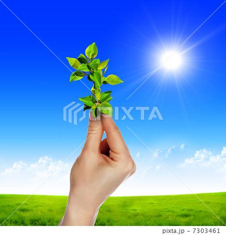 hands holding a plantの写真素材 [7303461] - PIXTA