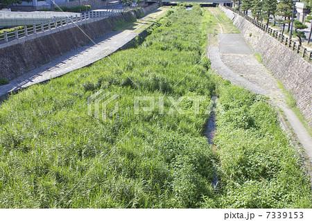 川の雑草 7339153