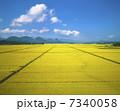 田園風景 田園 稲作の写真 7340058