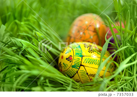 color easter eggs in nest from green grassの写真素材 [7357033] - PIXTA