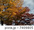 秋 7409805