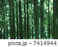 杉 7414944