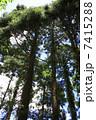 屋久杉 樹木 自然の写真 7415288