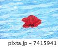 リゾートイメージ 水面 花の写真 7415941