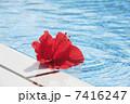 プール お花 花の写真 7416247