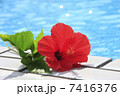 プール トロピカルフラワー リゾートイメージの写真 7416376