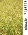 農作物 稲穂 米の写真 7416778