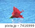 プール リゾートイメージ 花の写真 7416999