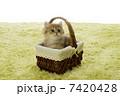 茶チンチラとかご 7420428