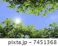 太陽光 新緑 太陽の写真 7451368