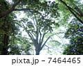 木漏れ日 7464465