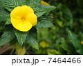 黄色い花 7464466