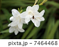 白い花とハチ 7464468