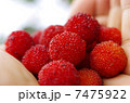 山桃 実 果実の写真 7475922