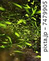 ゲンジホタル 昆虫 蛍の写真 7479905