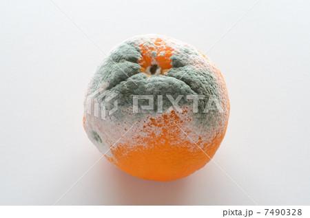 アオカビの生えたオレンジ 7490328