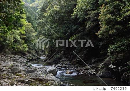 清滝川、落合周辺 7492256