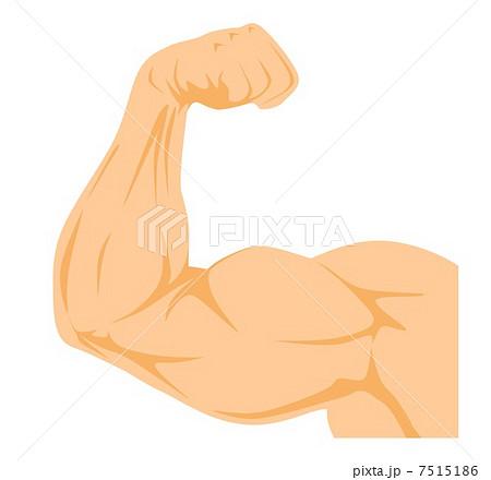 腕の筋肉 前面のイラスト素材 7515186 Pixta