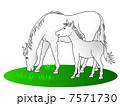 白馬の親子 7571730