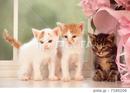窓辺の仔猫の写真素材 [7580206] - PIXTA