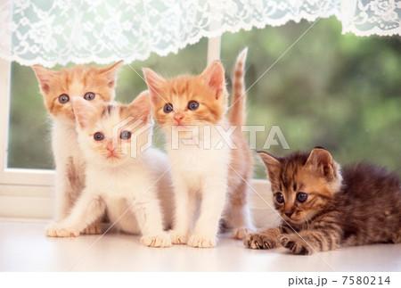 窓辺の仔猫の写真素材 [7580214] - PIXTA