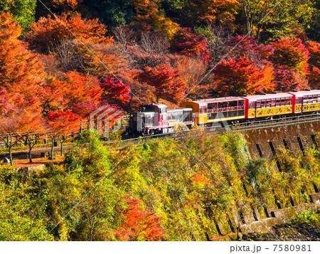 紅葉のトロッコ列車 7580981