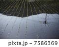 早苗 苗 水田の写真 7586369