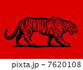トラが歩く 7620108