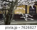 櫻 桜 ソメイヨシノの写真 7626827