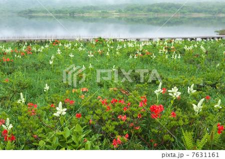 福島 北塩原村 雄国沼の写真素材 [7631161] - PIXTA