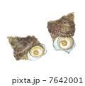 巻貝 サザエ 貝のイラスト 7642001