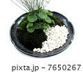 盆栽 7650267