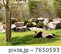 sleeping panda 7650593