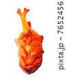 蛹 カブトムシ 昆虫の写真 7652456
