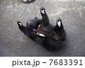小熊 7683391