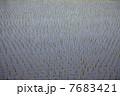 田んぼ 7683421