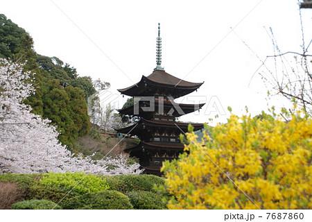 桜の季節の瑠璃光寺五重塔 7687860