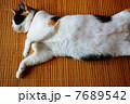 茣蓙の上で寝る三毛猫 7689542