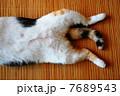 茣蓙の上で寝る猫の尻尾 7689543
