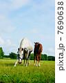 サラブレッド 競走馬 動物の写真 7690638