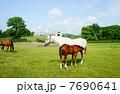 サラブレッド 競走馬 動物の写真 7690641