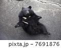 小熊 7691876