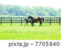 サラブレッド 競走馬 馬の写真 7705840