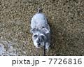 軽井沢「千ヶ滝」の清流03 7726816