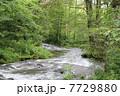 軽井沢「湯川」の清流 7729880