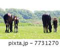 子馬 サラブレッド 競走馬の写真 7731270