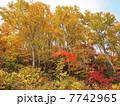 秋の越後湯沢03 7742965