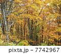 秋の越後湯沢01 7742967