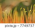 苔の語らい 7749737